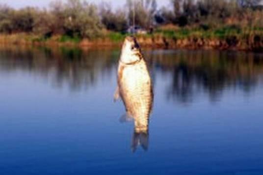 рыбалка в темрюке рыболовные базы